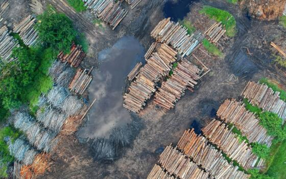 Vast piles of felled logs are visible from above.